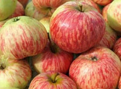 Саженцы яблони - Коричное полосатое