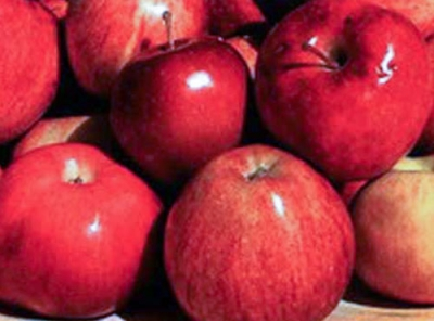 Саженцы яблони - Скала